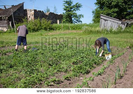 Woman and man working garden with a hoe. Hobbies and ecological living background