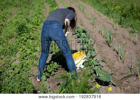 Woman working garden with a hoe. Hobbies and ecological living background