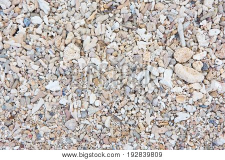 Coral sand. Macro of white sand in beaches coral reefs.  Sand mainly consists fragments of coral.