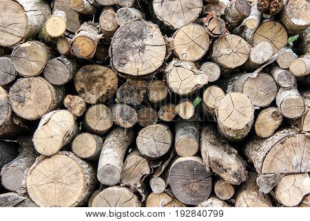 Wood tree texturestacked in a pile and sawn
