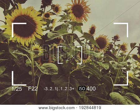 Camera Capture Sunflower Snap Shot Banner