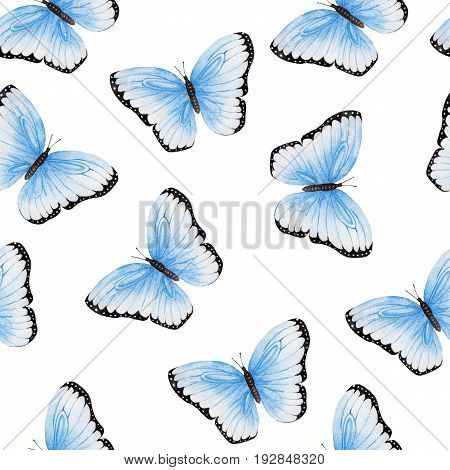 Blue and black butterflies - hand drawn watercolor on white background