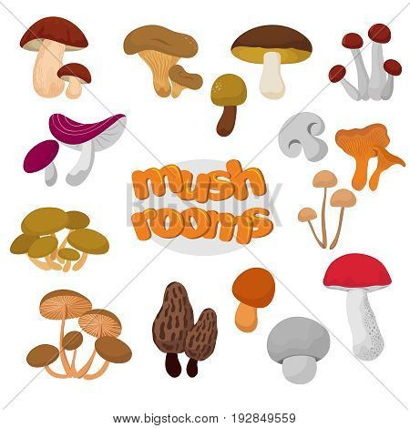 Forest summer and autumn cartoon edible mushrooms vector set. Mushroom food illustration collection