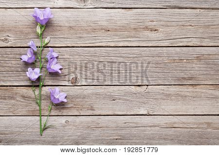 Blue bell flowers on wooden background. With copy space