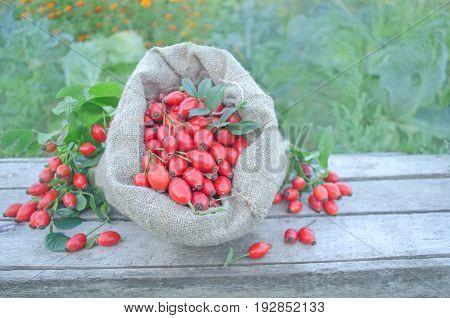 Linen Bag With Rosehip Berries