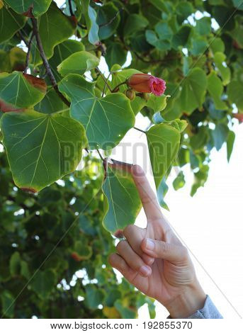Selection focus of pointing finger with green leaf.