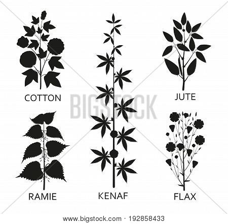 Cotton ramie kenaf jude and flax plants with leaves pods and flowers. Vector illustration