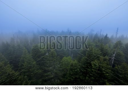Overhead view of foggy forest in Great Smoky mountains