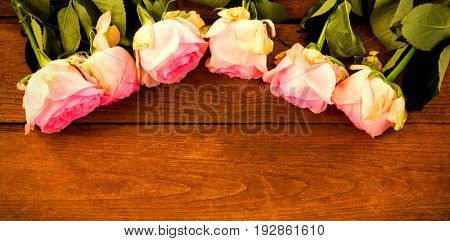 High angle view of pink roses arranged on wooden plank
