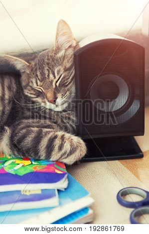 The Cat Sleeps On The Table, Laying Its Head On The Sound Column. A Funny Cat Is Sleeping On The Tab