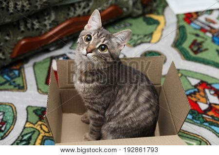 A Gray Tabby Cat, With Large Eyes, Sits In A Box. A Gray Cat Lies In A Box, And Looks Into The Camer