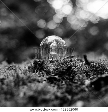 A light bulb in a forrest on a rainy day in black and white