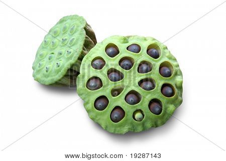 Lotus seed pot (lian zi) - The lotus seeds are used extensively in traditional Chinese medicine and desserts.
