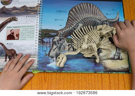 ZHONGSHAN CHINA-June 24:kid checking a Spinosaurus skeleton against a book with details of the same dinosaur on June 24 2017.