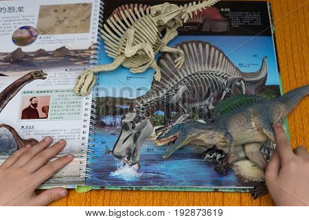 ZHONGSHAN CHINA-June 24:kid checking a Spinosaurus and a skeleton against a book with details of the same dinosaur on June 24 2017.