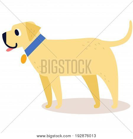 Cute cartoon golden retriever in a blue collar isolated on white background. Simple modern flat style vector