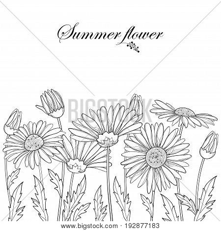 Vector border with outline Chamomile flowers, bud and leaf isolated on white background. Ornate floral in contour style for summer design and coloring book. Horizontal composition with Chamomiles.