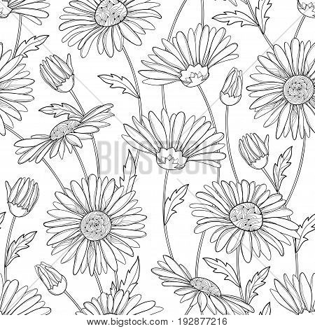 Vector seamless pattern with outline Chamomile flower, bud and leaves on the white background. Chamomile pattern in contour style for summer design, medicine, naturopathy, homeopathy, coloring book.