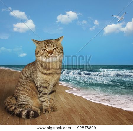 The big cat sits on the boardwalk.