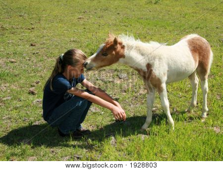 A Kiss From A Foal