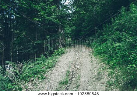 dirt road in mountains forest in sumer day