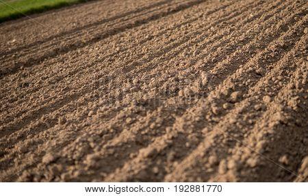 Plowed Empty Field