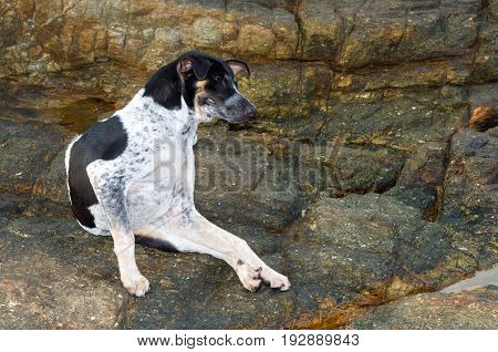 solitary vagrant dog on the beach in nature