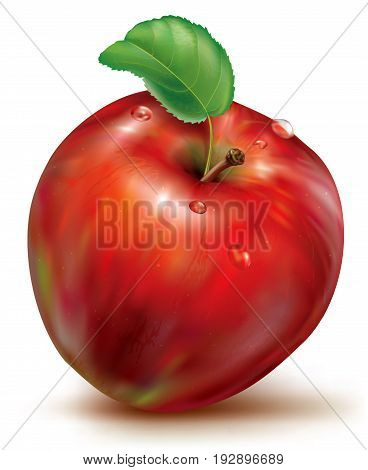 Realistic vector illustration of red apple on white background