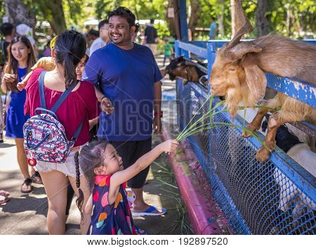 Chonburi Thailand - June 24 2017 Unidentified tourists is feeding animals at Khao Kheow Open Zoo the biggest zoo in Thailand.