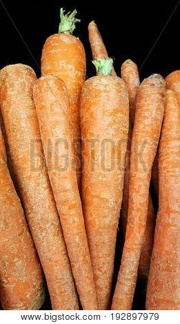 Group of fresh carrot sticks on a black background