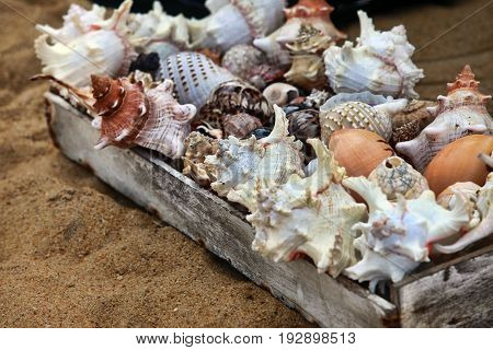 Different seashell are sold on a beach. Sri Lanka