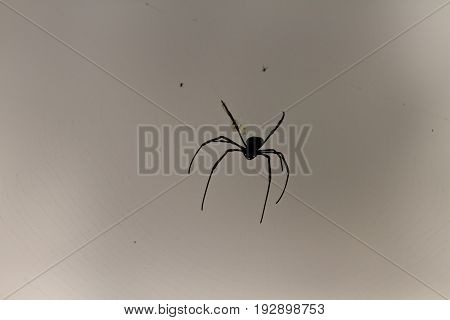 silhouette of a spider in Laos, asia