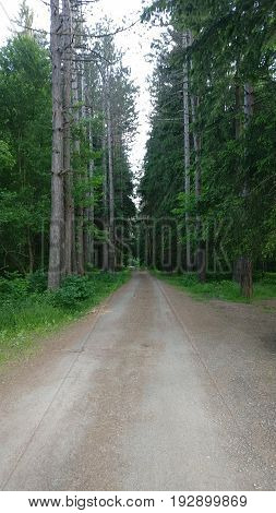 Lonely, quiet, secluded path through a green forest