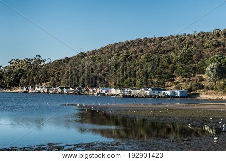 Hobart Australia - March 19. 2017: Tasmania. row of small beach houses built over water at Cornelian Bay. Blue sky mirrored in River. Green mountain in back. White birds in front on beach.
