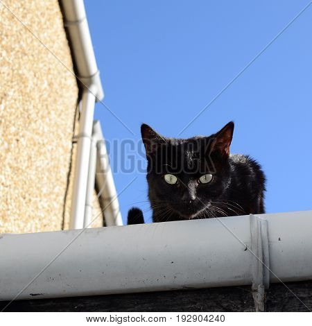 Black Cat On The Roof