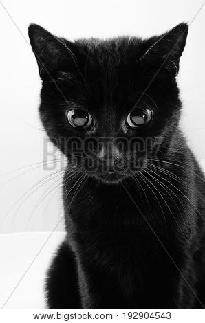 Cute Black Cat With Large Eyes