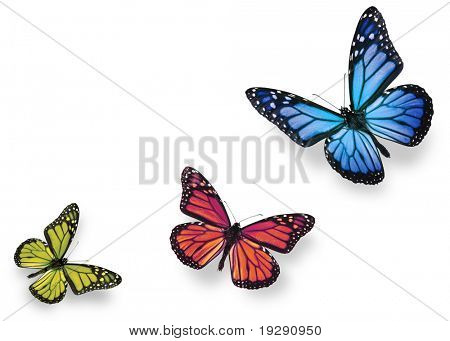 Green pink and blue butterflies isolated on white with soft shadow beneath each