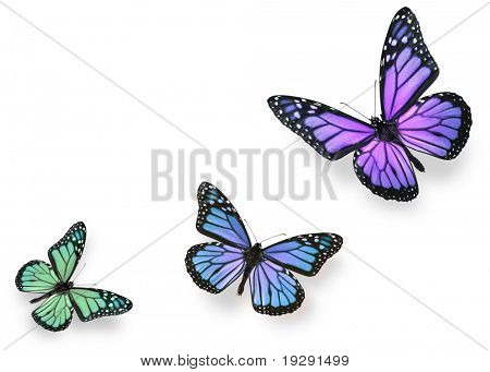 Green blue and purple butterflies isolated on white