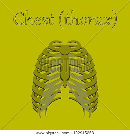 human organ icon in flat style chest thorax