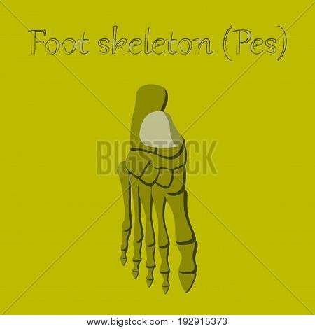 human organ icon in flat style foot skeleton