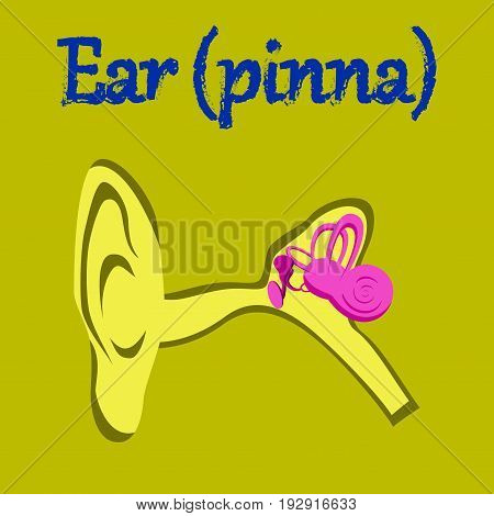 human organ icon in flat style ear