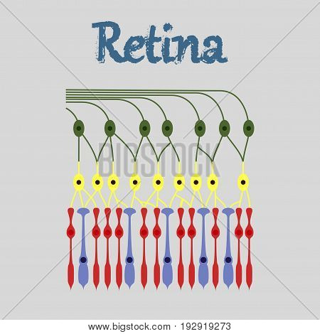 human icon in flat style structure retina