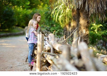 Two Cute Little Sisters Watching Animals In The Zoo On Warm And Sunny Summer Day. Children Watching