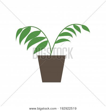 Icon in flat design Ficus floral nature