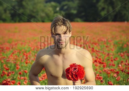 man with muscular body and athletic torso hold flower bouquet in field of red poppy seed with green stem on sunny natural background summer drug and love intoxication opium valentines day