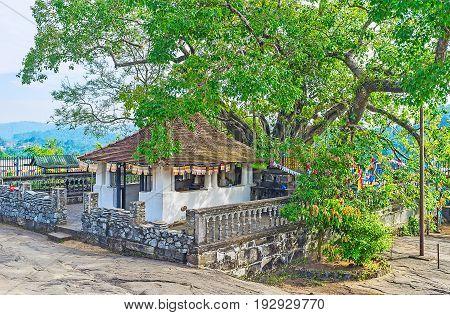 The Bodhi Tree In Gadaladeniya Vihara