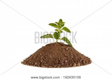 Green plant sprout growing from soil. Isolated on white.