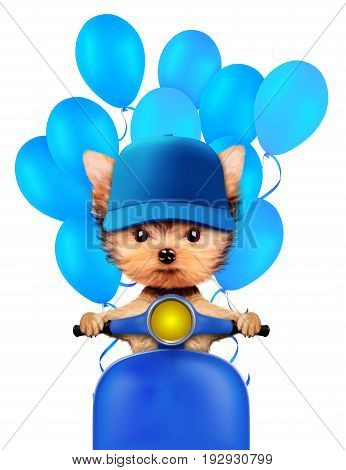 Lovely puppy sitting on motorbike with balloons, isolated on white. Love and friendship concept. Realistic 3D illustration