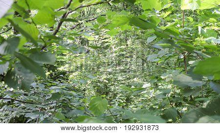 Dark forest background. Karelia forest trees 4k