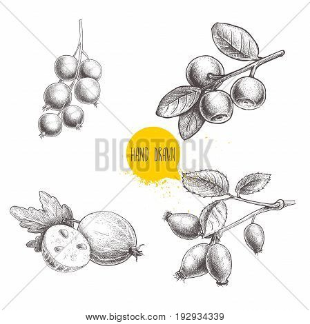 Hand drawn sketch style berries set. Blueberry branch rose hip branch black or red currant and gooseberries with sliced berry. Eco berries vector illustration isolated on white background.